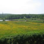 Природно-исторический парк «Битцевский лес»
