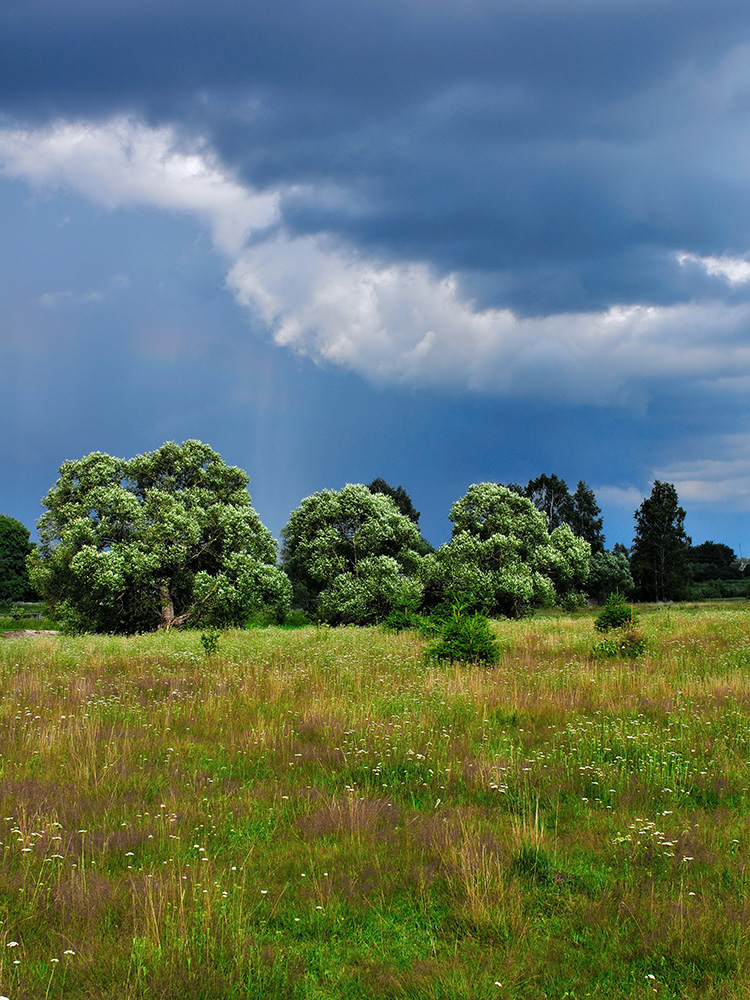 Орловское Полесье — национальный парк на северо-западе Орловской области
