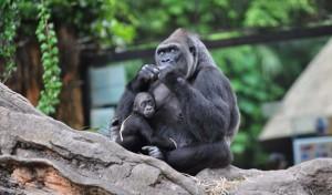 zoopark_ueno