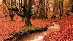 Баварский лес. Бавария, Германия