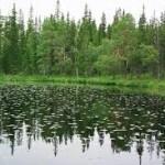 Онежское поморье. Национальный парк. Архангельская область